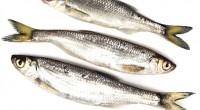 הדגים נחשבים לקבוצה המגוונת ביותר מכל בעלי החוליות כשסך הכול ידועים יותר מעשרים ושבעה אלף מינים שונים של דגים. עם זאת, רק מספר מצומצם מאוד יחסית של דגים משמשים את […]